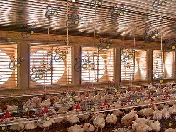 سیستم تهویه مرغداری